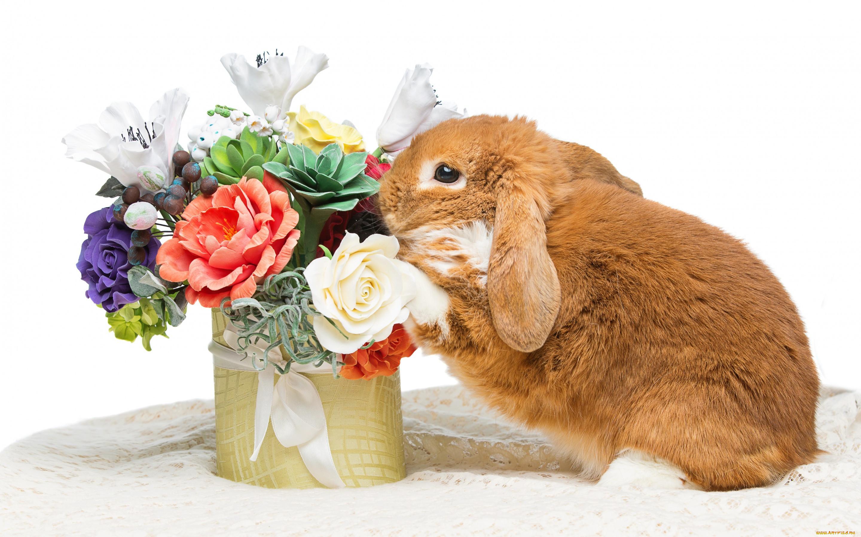 открытка заяц с букетом цветов оказывается порталом волшебную